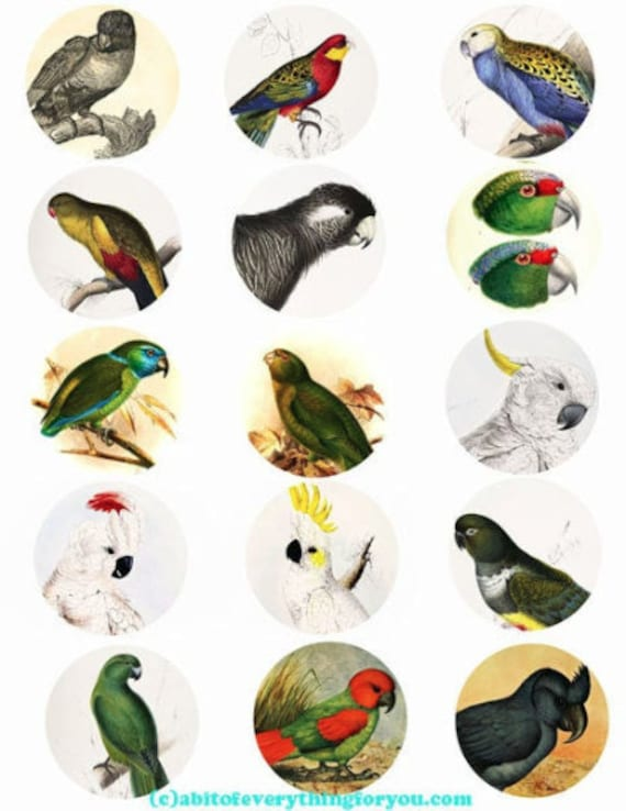 printable digital collage sheet parrot cockatoo birds art clipart 2 inch circles animal nature images printables pendants diy jewelry making