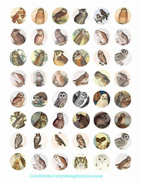 printable digital collage sheet vintage owls birds art clipart 1 inch circles animal nature images printables pendants diy jewelry making