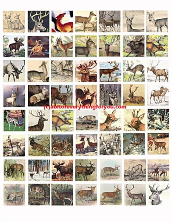 deer bucks does collage sheet 1 inch squares clip art digital download graphics images  animal nature art craft pendant pins printables