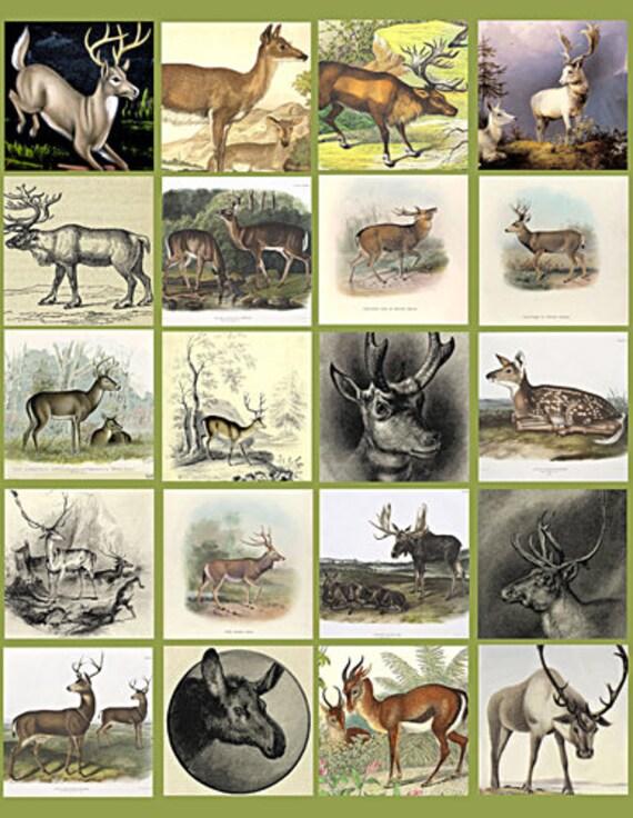 deer bucks does collage sheet 2 inch squares clip art digital download graphics images  animal nature art craft pendant pins printables