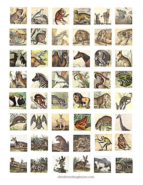 "vintage forest jungle animals clipart digital download collage sheet 1"" inch squares graphics images printables"