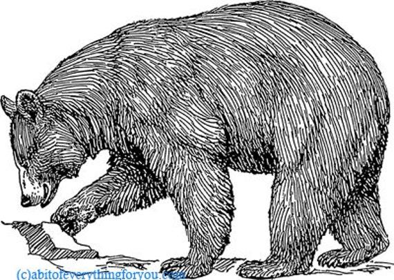 black bear illustration printable art print clipart png download digital vintage image graphics digital stamp animal wildlife artwork