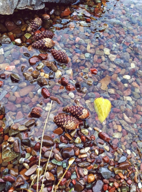 Gravel and pinecones photograph print, pebbles, stones abstract brown wall art Flathead Lake photography montana nature still life picture