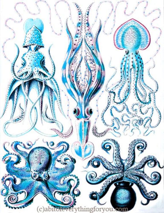 "blue octopus squid sealife ocean animals art printable digital downloadable vintage image graphics nautical beach home decor 8.5"" x 11"""