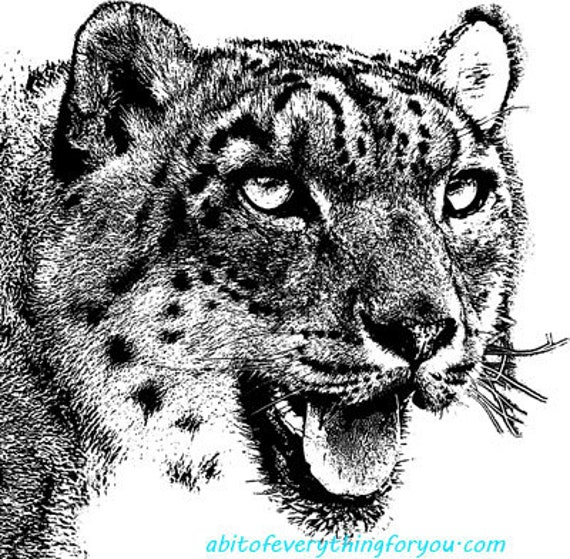 abstract leopards male female big cats printable art png clipart download digital image graphics nature printable animal artwork