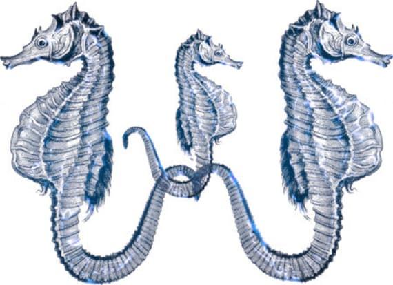 blue seahorse family sealife ocean animals art printable clipart png digital downloadable marine life image graphics