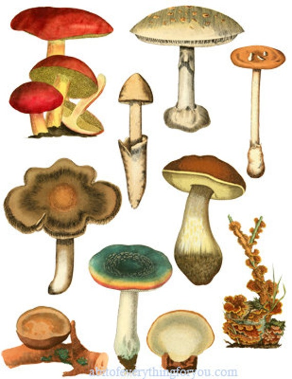 mushrooms fungi collage sheet printable die cuts clipart digital download craft cut outs nature botanical graphics images for DIY