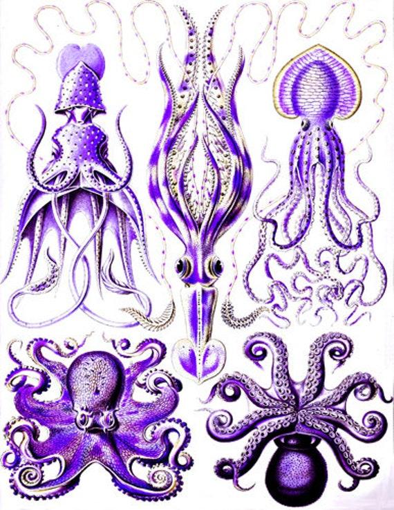 "purple octopus squid sealife ocean animals art printable digital downloadable vintage image graphics nautical beach home decor 8.5"" x 11"""