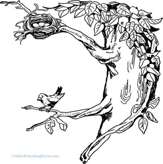 bird in tree nest printable art coloring page clipart png digital download vintage image graphics digital stamp animal artwork