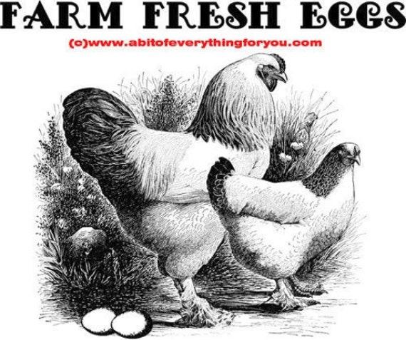 chicken farm fresh eggs original printable art print png clipart animal bird digital download image graphics country decor home decor