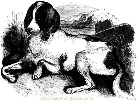 hound dog vintage art clipart png Digital Download printable Image graphics black and white illustration for cards t shirts tags etc