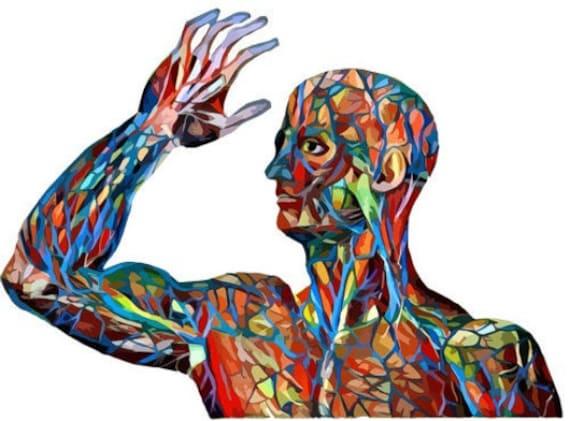 abstract human anatomy man arteries veins body parts clipart png jpg printable wall art download digital image graphics science biology