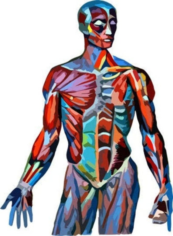 human anatomy muscle man body parts clipart png jpg abstract printable wall art instant download digital image graphics science biology
