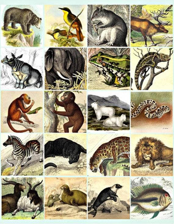 jungle forest animals printable art collage sheet clip art digital download 2 inch squares graphics images craft digital print