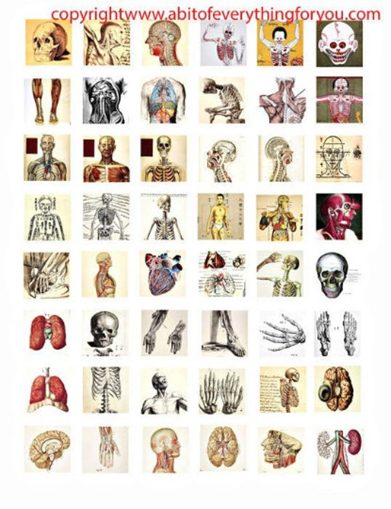 "human anatomy skulls skeletons body parts vintage clip art digital download collage sheet 1"" inch squares graphics images craft printables"