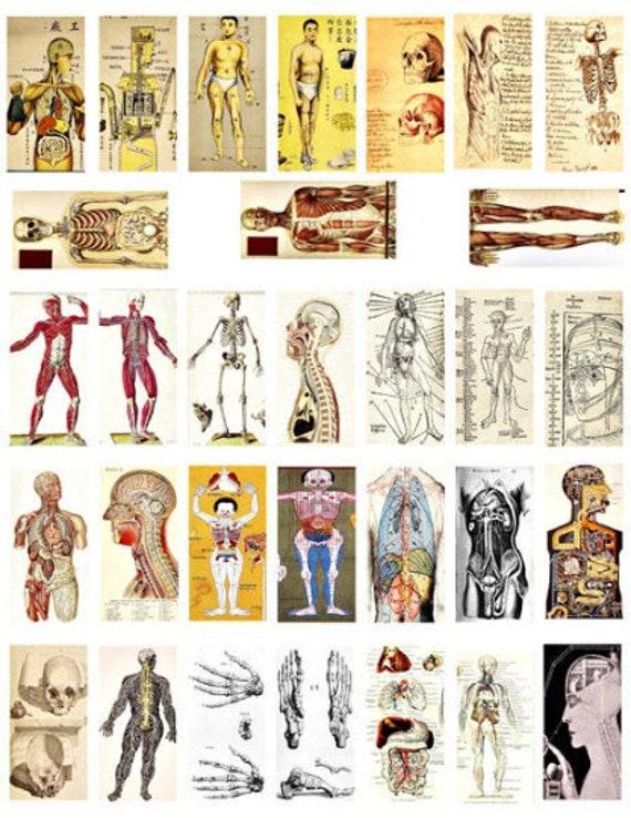 "human anatomy skulls skeletons domino collage sheet 1"" x 2"" inch graphics image printables body parts vintage clip art digital download"