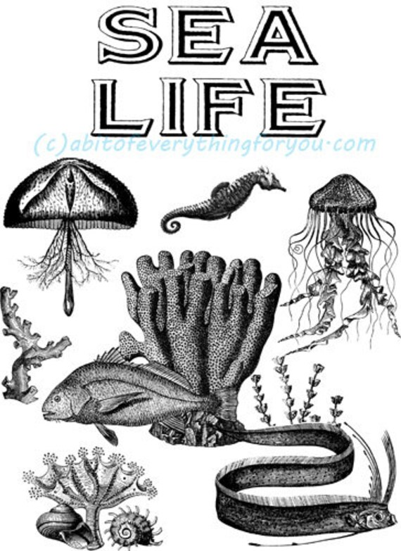 marine life sealife ocean animals plants art printable clipart png digital downloadable image graphics