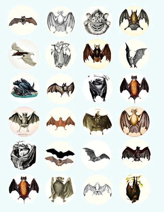 vampire bats nocturnal animals art clip art digital download collage sheet 1.5 inch circles graphics images craft printables