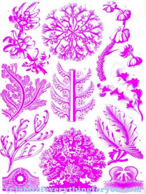 "purple coral aquatic plants sealife ocean art printable clipart png digital downloadable vintage image 8.5"" x 11"" nautical beach home decor"