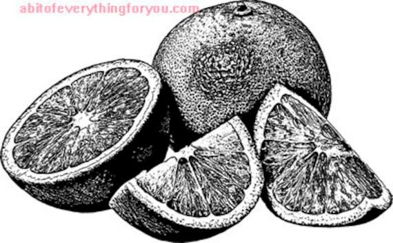 oranges fruit printable modern art png jpg digital download image graphics downloadable black and white artwork kitchen home decor