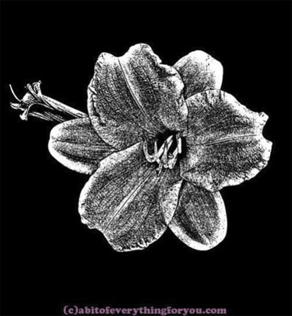 "Narcissus flower printable art png clipart downloadable digital download art image plants nature prints 9"" x 10"""