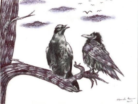 bird crow raven drawing original art pen ink animal illustrations black and white nature wildlife art