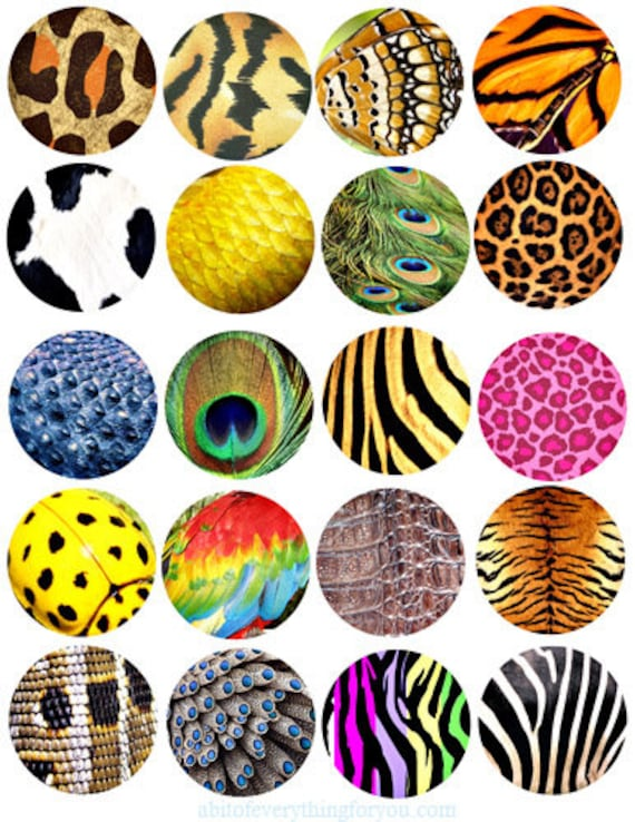animals patterns textures clip art digital download collage sheet 2 inch circles graphics images craft printables