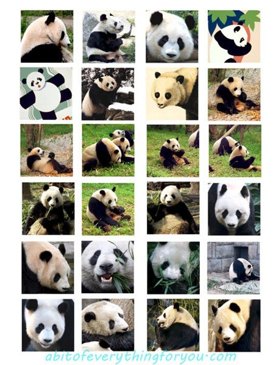 panda bears animal pictures art collage sheet 1.5 inch squares clip art digital download graphics downloadable nature images printables
