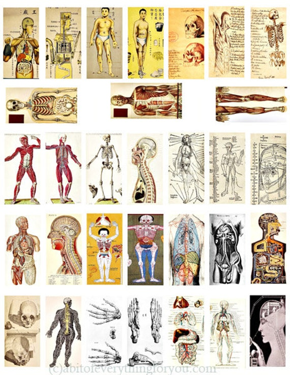 "human anatomy skulls skeletons domino collage sheet 1"" x 2"" inch graphics image printables body parts vintage clip art digital download"