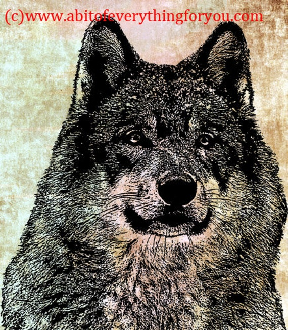 wise old wolf head original printable art print wolves png jpg clipart animal digital download image graphics nature wildlife home decor