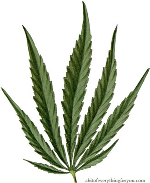 marijuana pot leaf cannabis printable art clipart png download digital image plant graphics downloadable