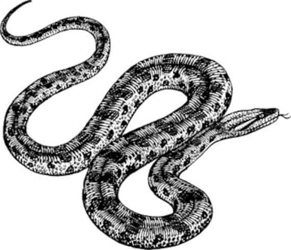anaconda snake art printable clipart png reptile animal digital download image graphics digital stamp black and white artwork