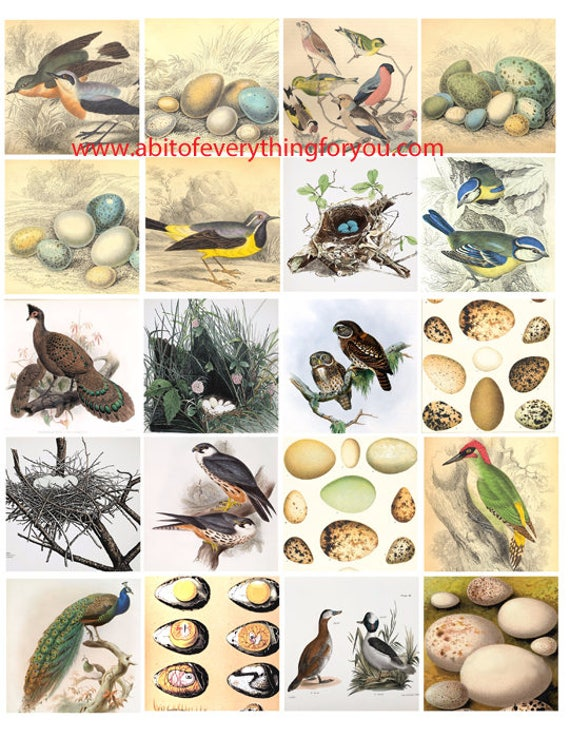 birds nests and bird eggs animals nature clip art digital download collage sheet 2 inch squares graphics images craft printables