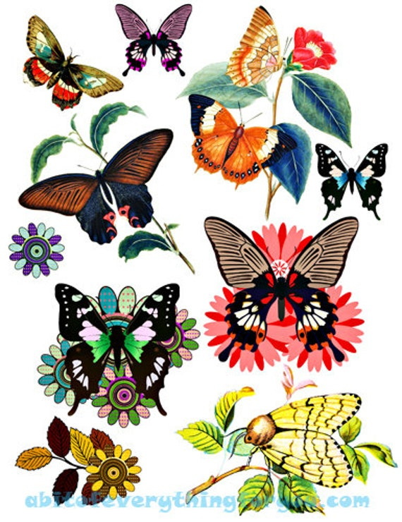 Flowers butterfly butterflies collage bug insect printable art graphics images digital download craft nature print outs