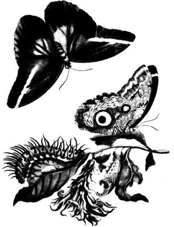 butterfly caterpillar illustration vintage printable art print png clipart download digital image graphics insect bug black and white art