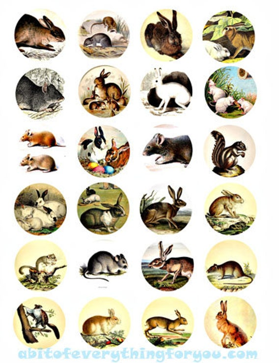 bunny rabbit mouse animal art clipart digital downloadable collage sheet 2 inch circles graphics jewelry diy crafts images printables