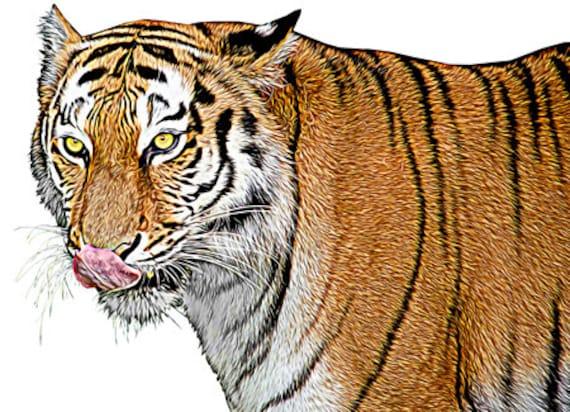 color Tiger animal art printable digital downloadable jungle safari nature image graphics home living room bedroom wall diy crafts