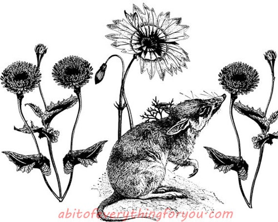 rat flowers animal printable art download digital image png jpg graphics downloadable nature wildlife art
