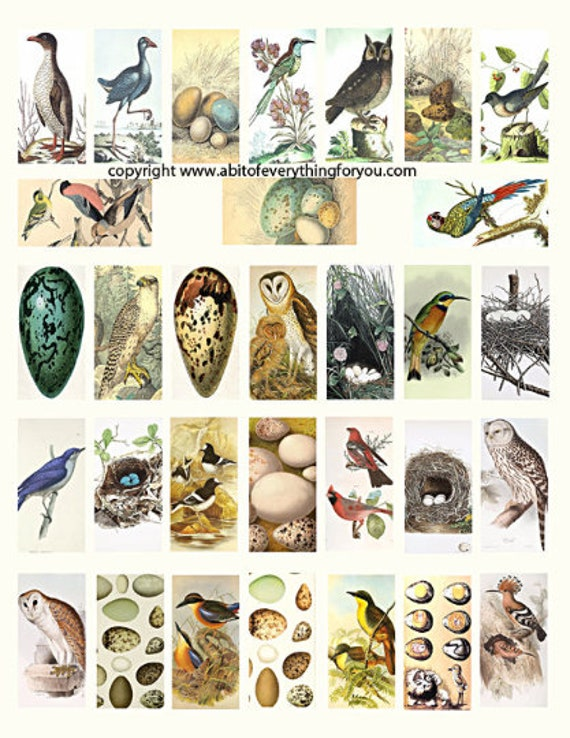 """birds eggs nests clipart digital download domino collage sheet 1"""" x 2"""" inch vintage graphics images printables for pendants pins magnets"""
