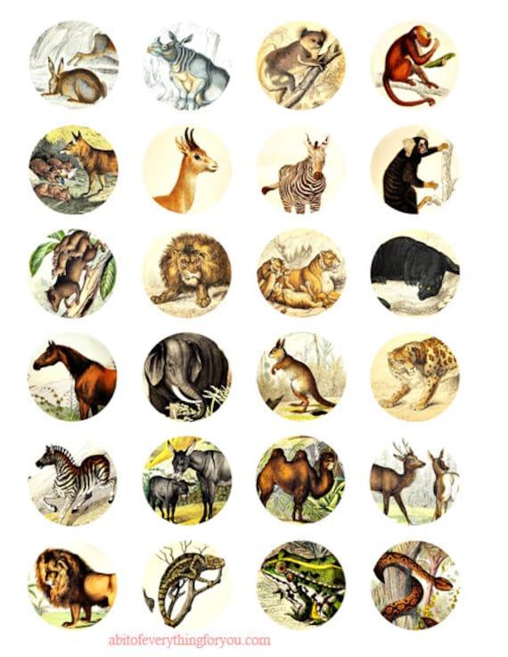 "jungle safari animals vintage art clip art digital download collage sheet 1.5"" inch circles graphics images jewelry making craft printables"