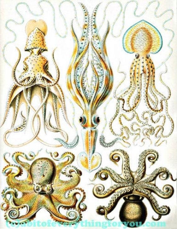"octopus squid sealife ocean animals art printable digital downloadable vintage image graphics nautical beach prints home decor 8.5"" x 11"""