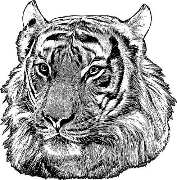 jungle tiger head png jpg clipart printable art digital download animals safari clipart downloadable transfer graphics images
