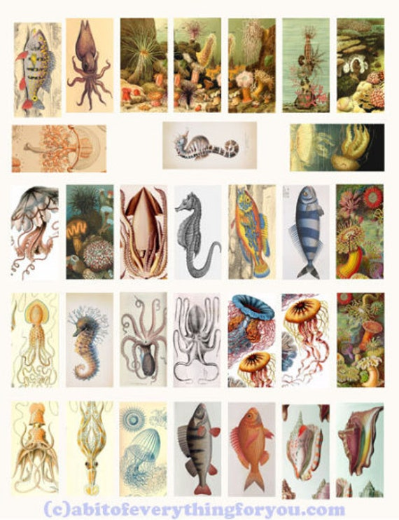 "vintage fish sealife ocean animals art domino collage sheet 1"" x 2"" inch clipart digital download graphics images printables pendants"
