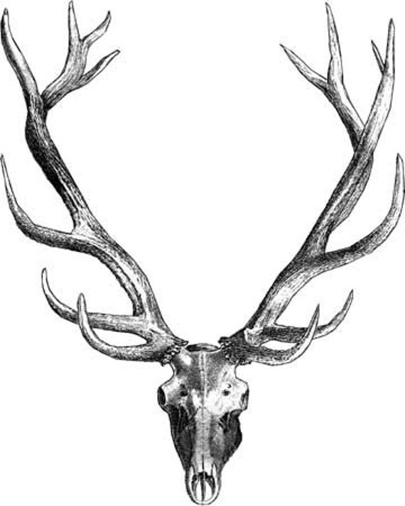 deer skull buck antlers printable animal art print clipart png jpg download digital vintage image graphics transfer black and white