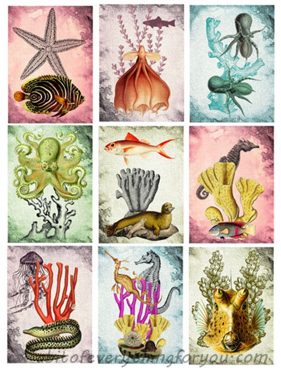 printable collage sheet sealife ocean animals art 2.5 x 3.5 inch images clipart digital download graphics downloadable nautical beach images