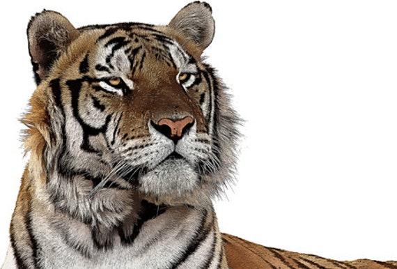 colorful Tiger animal art clipart printable wall art digital downloadable jungle safari nature image graphics diy crafts