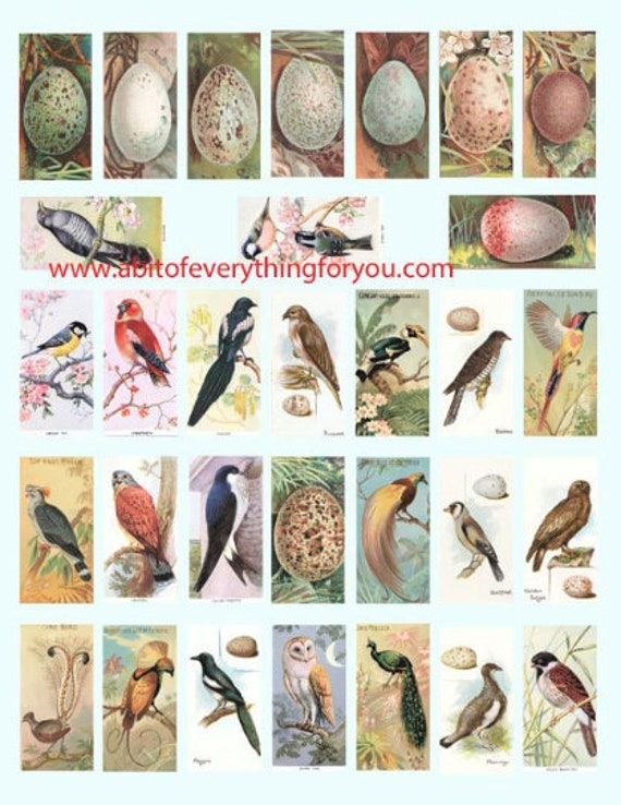 "birds eggs nests clipart digital download domino collage sheet 1"" x 2"" inch vintage graphics images printables for pendants pins magnets"