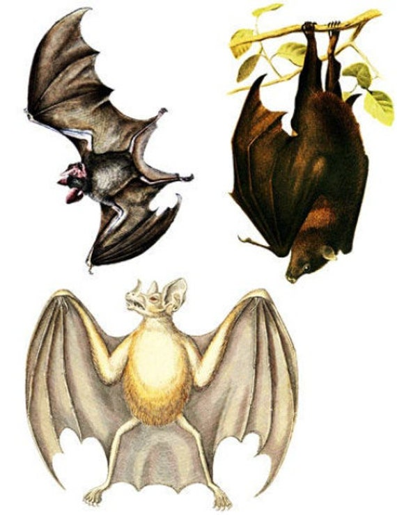 3 bat color illustrations collage sheet png jpg printable wall art animal clipart instant download digital image graphics Halloween die cuts