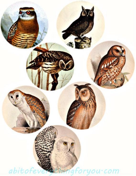 vintage owls birds clip art digital download collage sheet 3 inch circles animal nature art graphics downloadable images printables