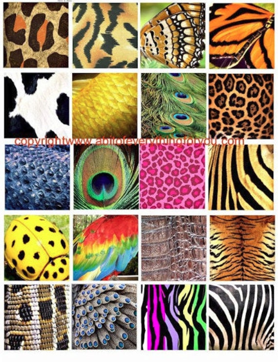 animals insects patterns textures nature clip art digital download collage sheet 2 inch squares graphics images craft printables
